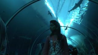 Singapore SEA Aquarium